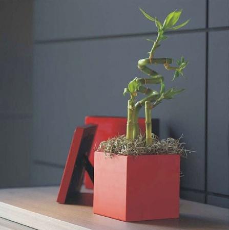 contemporary-vase-214733